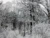 Slobozia - Iarna